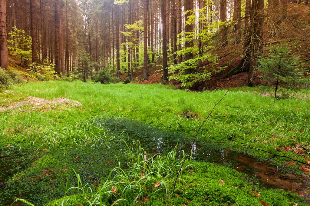 יער עם עצים פורחים