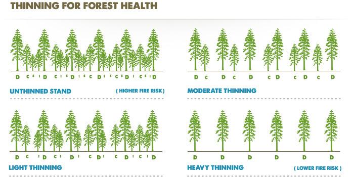 דילול יערות עבור שבבי עץ לגינה