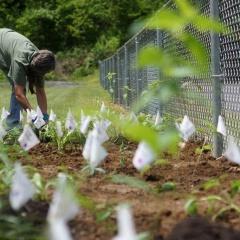 האם נדרשת הכנת הקרקע לפני חיפוי קרקע בשבבי עץ?