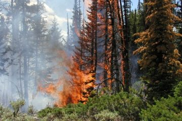 שיקום נזקי גל השריפות האחרון: איך עושים את זה?