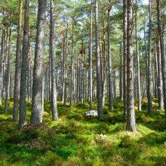 דילול יערות: נשמע רע? פה הטעות שלכם!
